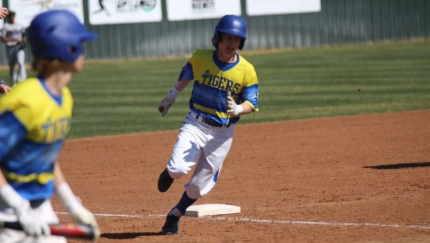 Tiger Baseball Sweeps Competition at Midland Tournament of Champions