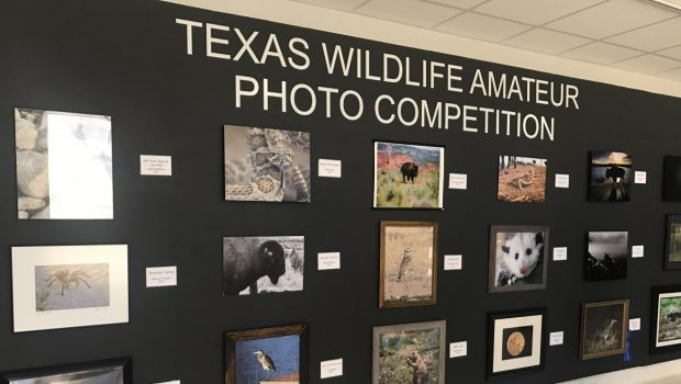 FHS Students Selected as Winners in Texas Wildlife Photography Contest